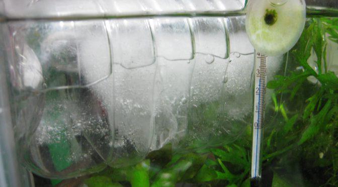 エビ水槽強制冷却